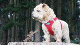 Curli Vest Air-Mesh Harnas Red_